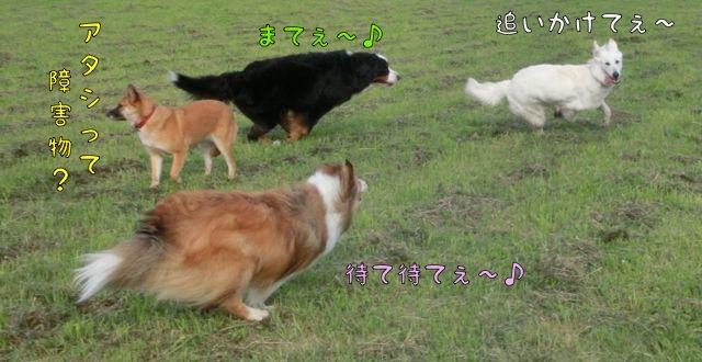 CIMG4683_201605021152102bb.jpg