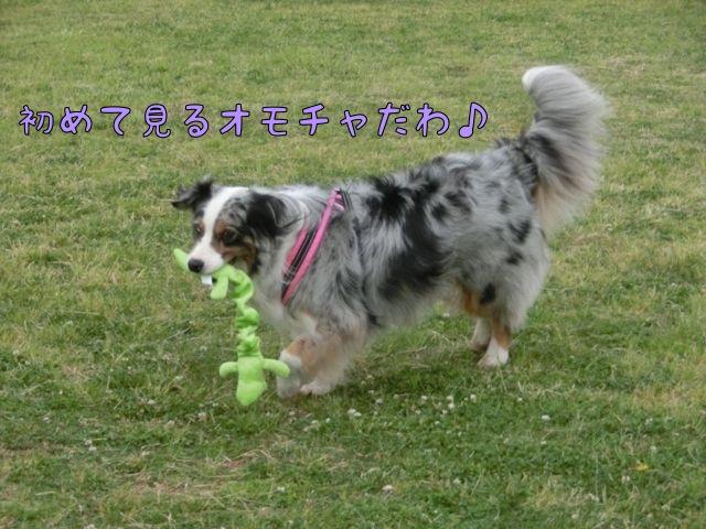 CIMG5161_201605121550410cf.jpg