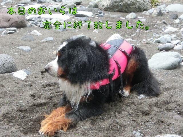 CIMG6316_20160606221856ea4.jpg