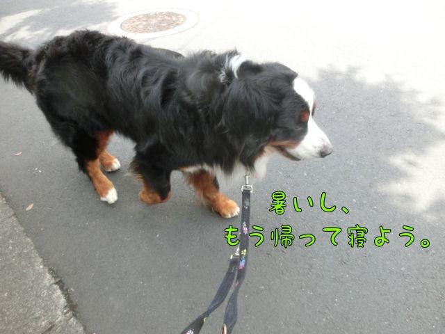 CIMG6942_201606201218332c1.jpg