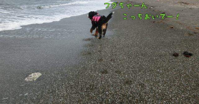 CIMG7085_2016062713180813e.jpg