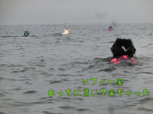CIMG7363.jpg