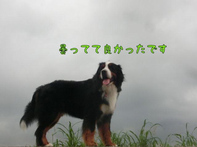 CIMG8141.jpg