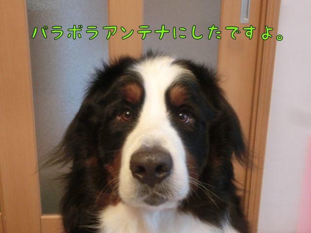CIMG8709.jpg