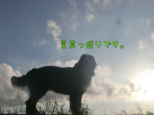 CIMG8782.jpg
