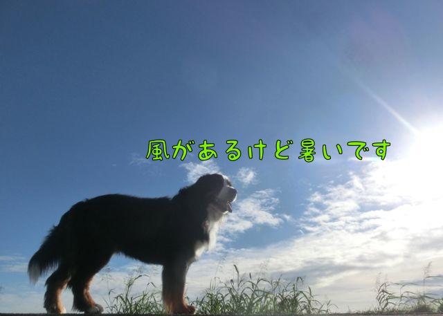 CIMG8804.jpg