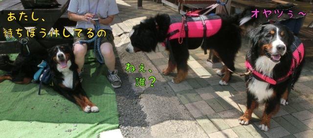 CIMG9134_2016081418573448b.jpg