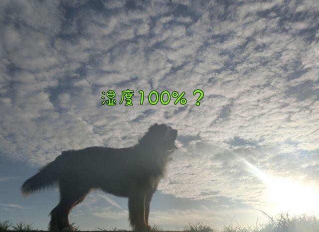 CIMG9493_201608271411011ee.jpg