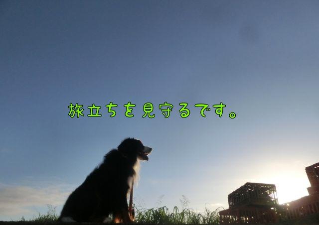 CIMG9622.jpg
