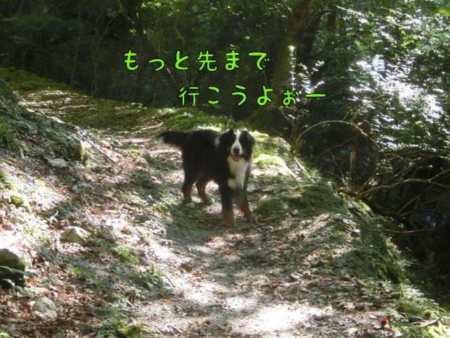CIMG9807.jpg
