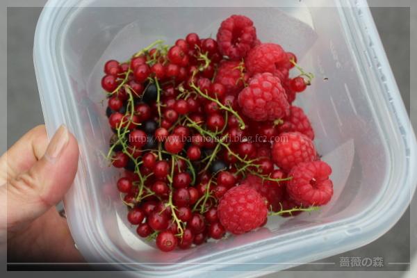 収穫 ベリー ラズベリー レッドカラント カシス 20160622