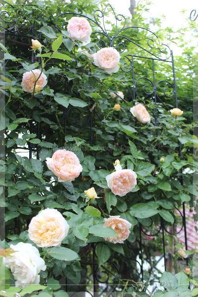 20160516 砕石駐車場花壇 エブリン