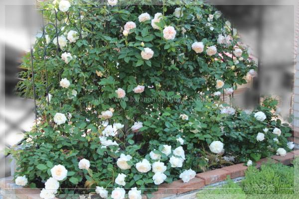 砕石駐車場花壇 グラスアンアーヘン ボレロ エブリン 201605