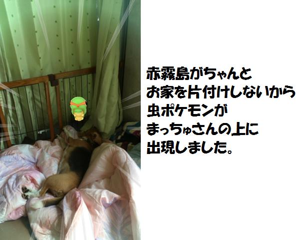 IMG_8990[1]