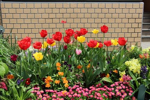 IMG_6700 my garden