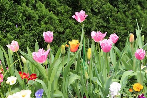 IMG_6702 my garden 2