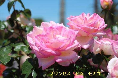 IMG_6912 プリンセスドゥモナコ