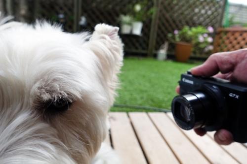 camerawonigirisimecyaukara3.jpg