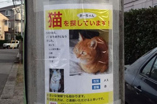 hahasitatteondogaochinaiyo2.jpg