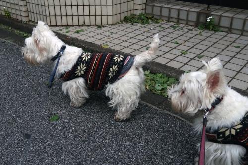 ichotteohisamayorikiondekana3.jpg