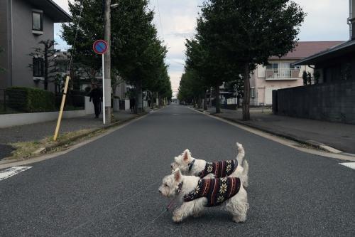 ichotteohisamayorikiondekana4.jpg