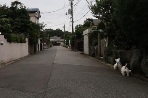 inuhadencyugawawoarukune1.jpg