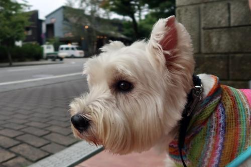 karuizawadeichibanfuruinomiya4.jpg
