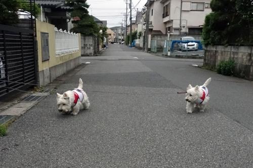 kotosimotuyuirininacchattazo3.jpg