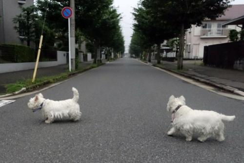kuchakuchagaogadaisuki5.jpg