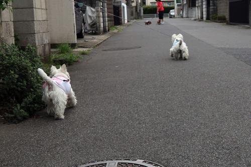 neteirusemiwookosudakejya3.jpg