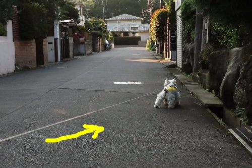 sayouhansayoujyanaikarabure2.jpg