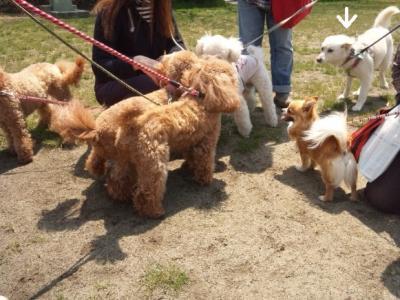 犬端会議 (1)
