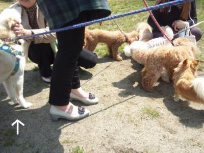 犬端会議 (2)