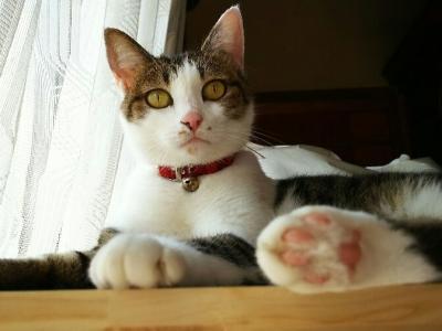 I家のネコ