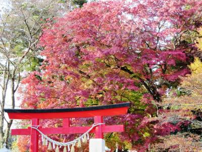 神社の紅葉 (1)