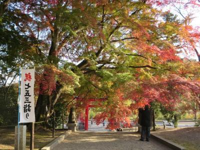 神社の紅葉 (2)