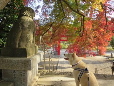 神社の紅葉 (4)
