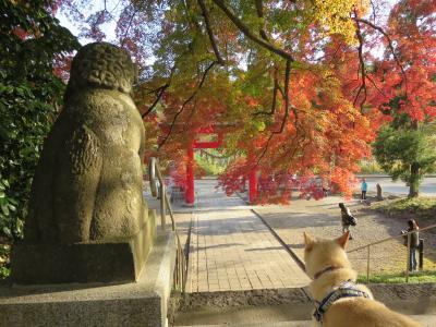 神社の紅葉 (5)