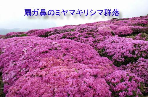 16kuzyuumiyama4.jpg