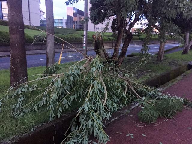 台風16号一過-11