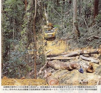 16.5.29朝日・消える熱帯林5