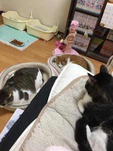 ナナちゃんエイト君4