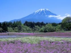 富士芝桜まつり会場 2016.05.12