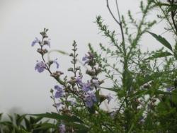 万里長城・八達嶺の植物