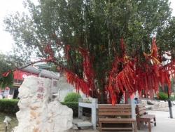 天津市古文化街 玉皇閣 祈願樹