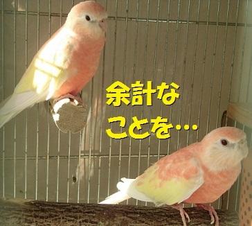 CIMG7001.jpg