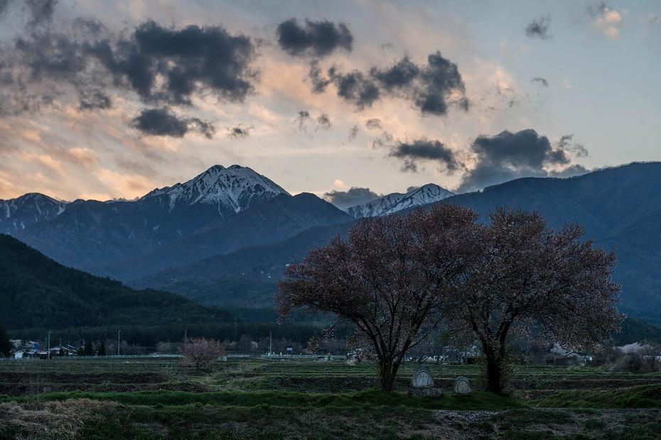 2016.04.14常念道祖神の桜3