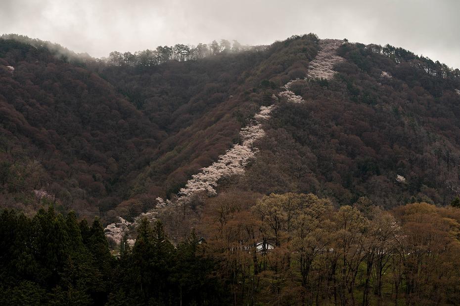 2016.04.14光城山7
