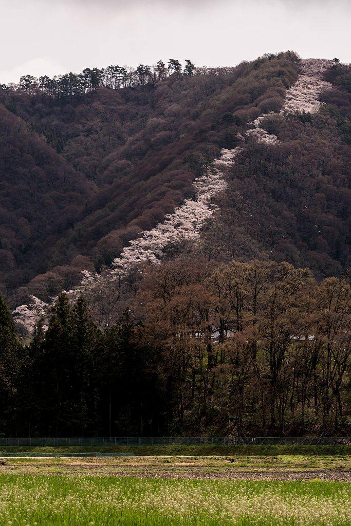 2016.04.14光城山8