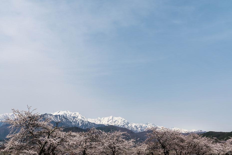 2016.04.16大町観光道路の桜並木6